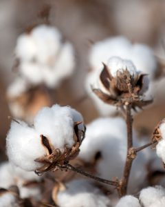 Natural fibres, sustainable fashion, Ecolookbook